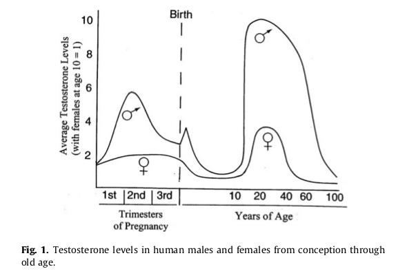 Werte Von Testosteron Bei Mann Und Frau über Verschiedene